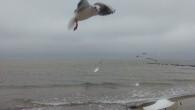 Bulgaria litoral Gasitimai josoferta pentruVara2018 in Bulgaria – la Balchik si Nessebar – cu reduceri […]